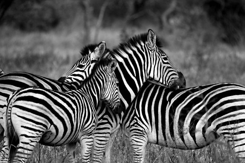 Quelques adresses touristiques à retenir lors d'un séjour au Kenya